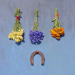 Luck symbol rusty horseshoe and medical herb flower bunch on blue wall — Stock Photo #51008493