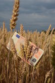 Agriculture business concept - euro banknote on ripe summer end wheat ears — Stock Photo