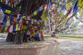 Colorful buddhist Prayer flags on tree in Lumbinis, Nepal — Photo