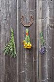 Lékařské bylinky levandule, měsíček (calendula) a yzop lékařský (hyssopus officinalis) na zeď — Stock fotografie
