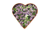 Wild marjoram oregano medical and spices flowers in heart form basket — Stock Photo