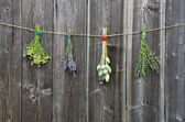 Medical herbs flowers bunch  on old wooden wall — Stock Photo