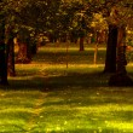 Sunset in park — Stock Photo #13606510