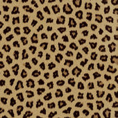 Leopard fur (skin) background or texture — Stock Photo
