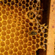 ストック写真: Bees work on honeycomb