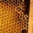 Bees work on honeycomb — Stock Photo