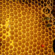 Bees work on honeycomb — 图库照片 #35475453