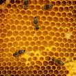 Bees work on honeycomb — Stock Photo #35475693