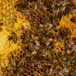 Stock Photo: Bees work on honeycomb