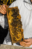 Beekeeper showing honeycomb frame — Photo