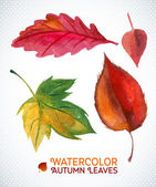 Watercolor autumn leaf set. Vector illustration Collection of watercolor hand drawn leaves. — Stock Vector