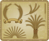 Wheat, a vintage set. Vector illustration. — Stock Vector