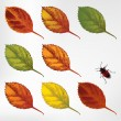 Set of colorful autumn leaves, hand-drawing. Vector illustration. — Stock Vector