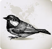 Bird titmouse, hand-drawing. Vector illustration. — ストックベクタ