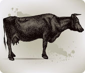 Cow, hand-drawing. Vector illustration. — Stockvektor