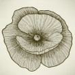 Poppy flower, hand drawing. Vector illustration. — 图库矢量图片
