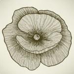 цветок мака, рука рисунок. Векторные иллюстрации — Cтоковый вектор