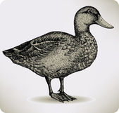 Bird duck, hand-drawing. Vector illustration. — Stock Vector