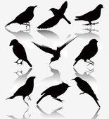 Colección de siluetas de las aves silvestres, ilustración vectorial. — Vector de stock