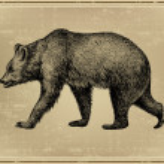 Animal wild bear, hand-drawing. Vector illustration. — Stock Vector