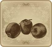 Apples with vintage frame, hand-drawing. Vector illustration. — Cтоковый вектор