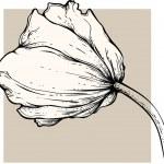 Tulip vector — Stock Vector #6608885