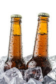 Beers on ice — Stock Photo