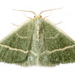 Green moth chlorissa etruscaria — Stock Photo