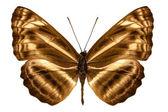 "Butterfly species Neptis omeroda omeroda ""sailer butterfly"" — Stock Photo"