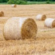 Round bales of hay in the field — Stock Photo