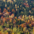 Autumn forest, colorful trees — Stock Photo