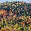 Colorful trees — Stock fotografie