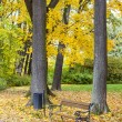 Park in autumn — Stock Photo #33750657