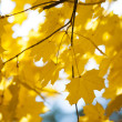 Yellow leaves, autumn background  — Stock Photo