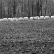 Bales of hay wrapped in white foil, black and white picture, spring, in a row row — Foto de Stock   #42899195