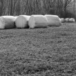 Bales of hay wrapped in white foil, black and white picture, spring, in a row row — Foto de Stock