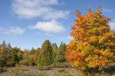 Boom in de herfst kleuren — Stockfoto