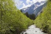 Small mountain stream — Stock Photo