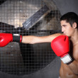 Боксер. Boxer — Stock Photo