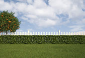 Garden with fence and hedge — Stock Photo