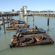 Stock Photo: Pier 39 in SFrancisco and its seals