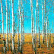 Birch grove — Stock Photo #14836379