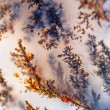 Dendrite crystals macro — Stock Photo