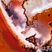Moss Agate — Stock Photo