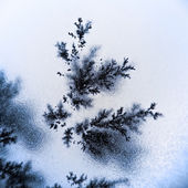 Dendrite crystals — Stock Photo