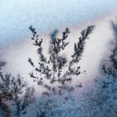 Dendrite — Stock Photo
