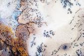 Moss Agate cream — Stock Photo