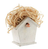 Starling house — Stock Photo