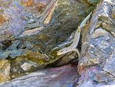 Kleine eidechse hinunter den berg-felsen — Stockfoto