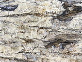 Texture of tree bark in the background — Stock Photo